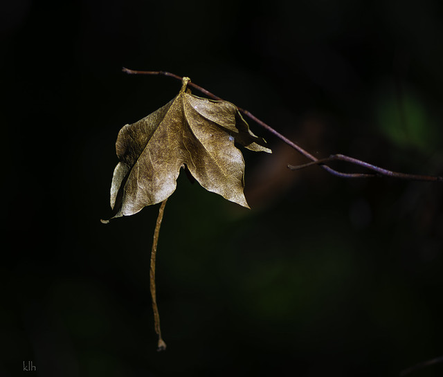 I kept passing this leaf down a path in the forest. 2 days ago it told me to stop and take a photo.