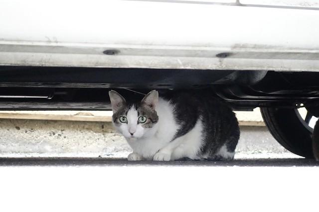 Today's Cat@2021−06−22