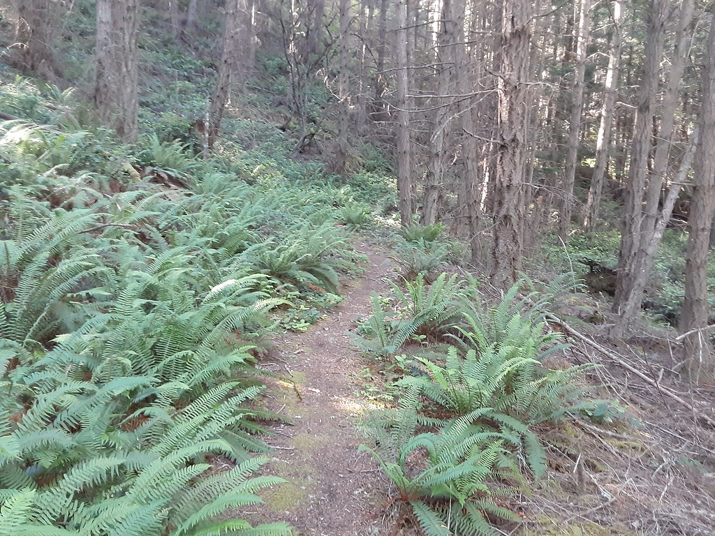 middle section of Cypress Head trail