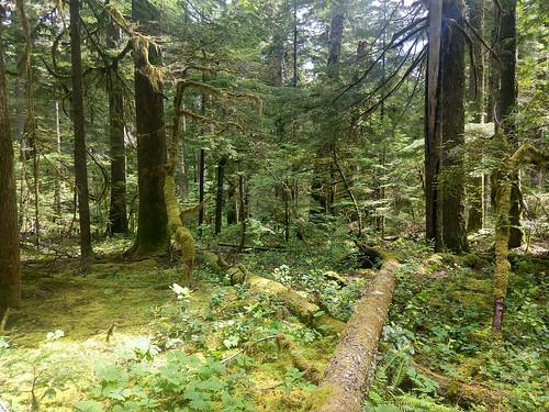 Mon, 06/21/2021 - 15:01 - Down wood.  PC: Wind River Forest Dynamics Plot Facebook page