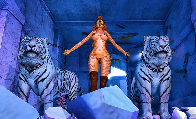 Tiger among the tigers