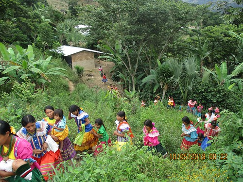 Indigenous Peoples' food systems: Insights on sustainability and resilience from the front line of climate change.