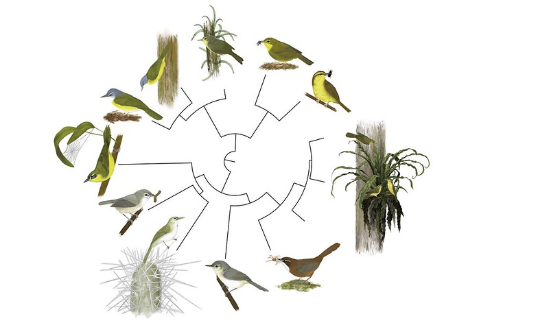 Circular image showing a selection of different birds representing a family tree