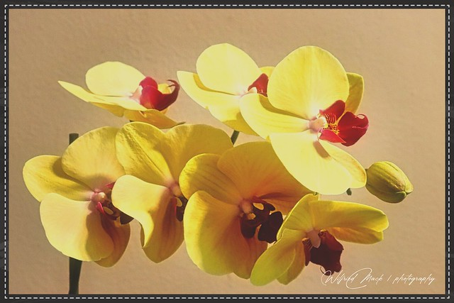 HDR_Orchidee