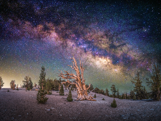Ancient Bristlecone Pine Forest Milky Way Inyo National Forest 45EPIC Elliot McGucken Fuji GFX100 Fine Art Landscape Nature Photography! Master Medium Format Fine Art Photographer! Fujifilm GFX 100 & FUJINON FUJIFILM Lens