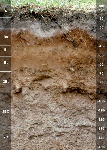 Iosco soil series MI