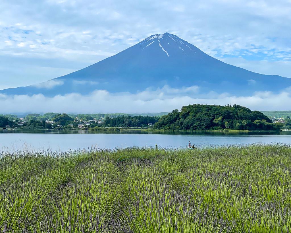 Fuji in early summer