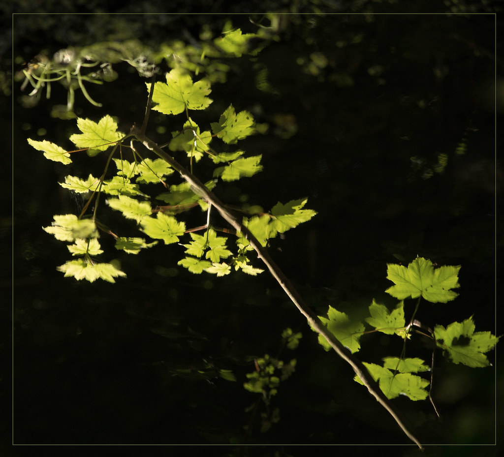 Reflected leaves
