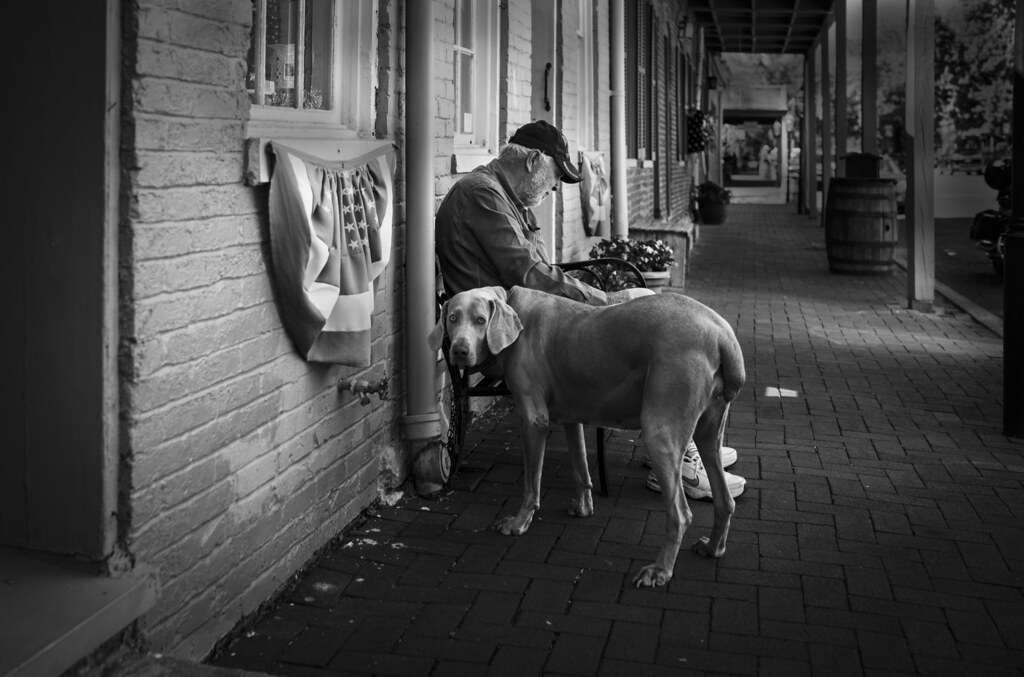 Dog and Man