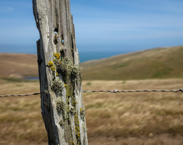 Fence post with lichens