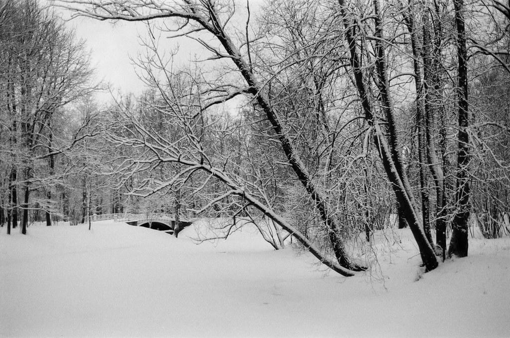 Trees sleep under a blanket of silver