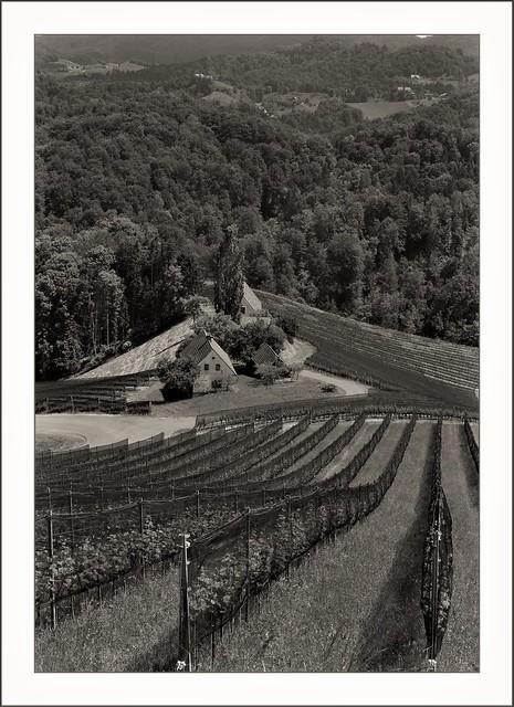 Südsteierische Weinstraße - am Eory Kogel