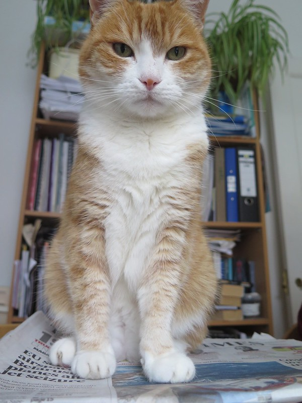 Disapproving Cat