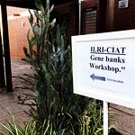 Workshop of CIAT and ILRI Forage Genebank Staff