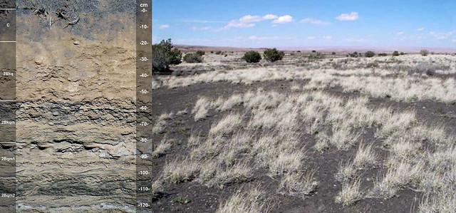 Cambidic Haplodurids and landscape AZ