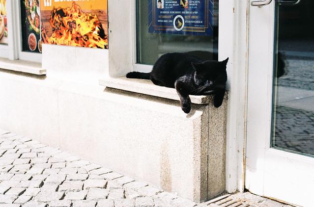 Blind guardian. Die Döner-Katze.