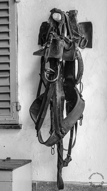 Bardature per cavallo da tiro, in un cortile dove una volta c'era un carrettiere che commerciava legna e carbone.
