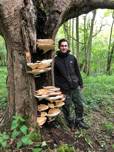 Tue, 06/22/2021 - 14:07 - Wytham Woods field crew co-leader Tom Atkins next to a woody mushroom species on a Sycamore tree at hectare 6.  Photo credit: Walter Huaraca Huasco