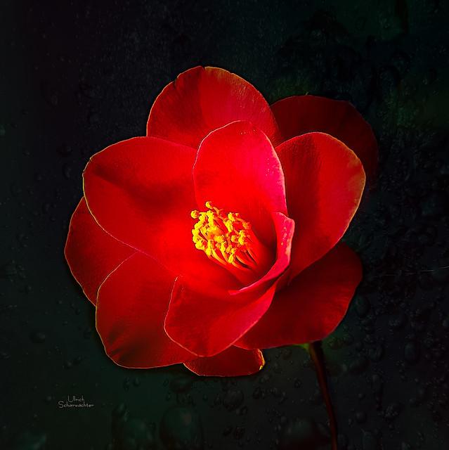 E272 Blumen, Flower