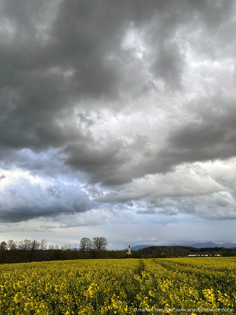 Wolken über dem Rapsfeld - Bad Wimsbach-Neydharting