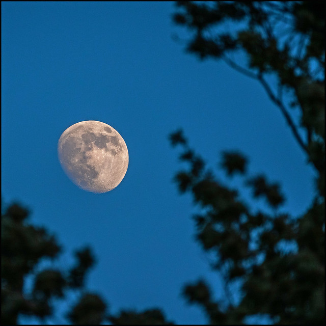 The June Moon
