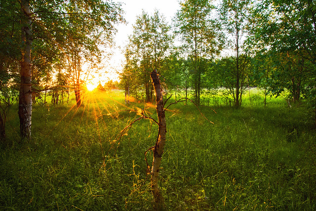 Sunset in the forest.