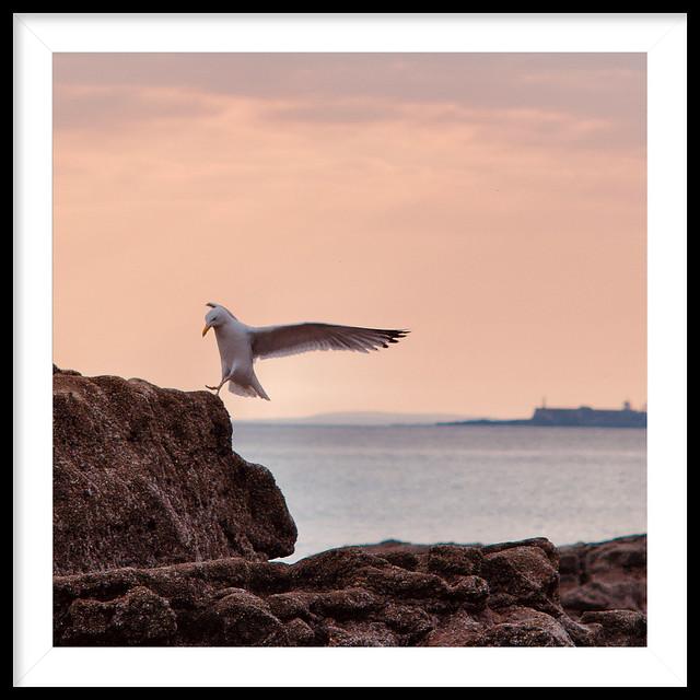 Ogmore Seagull