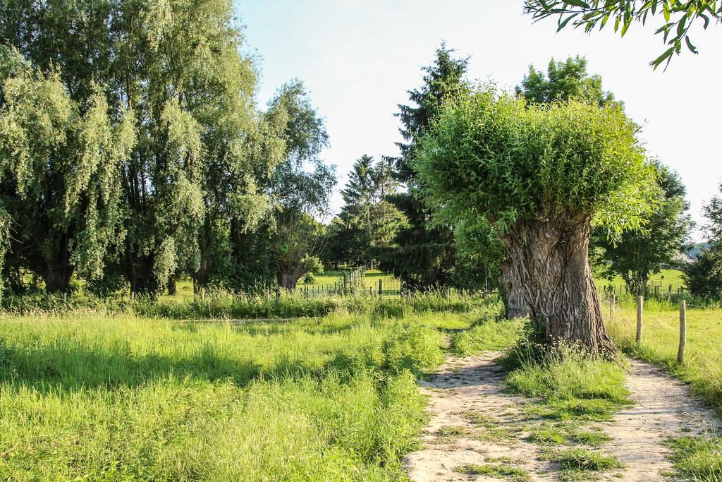 8110 - Limburg - Schin op Geul