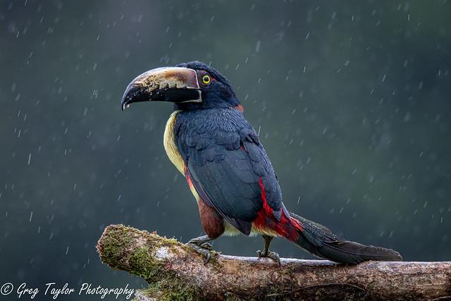 Rainy Day in the Tropics