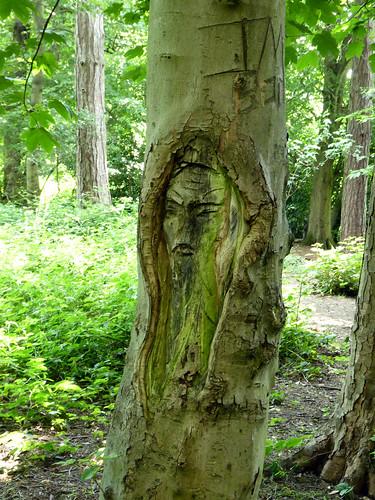 Apley Woods