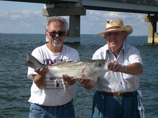 Photo of two men holding a striped bass