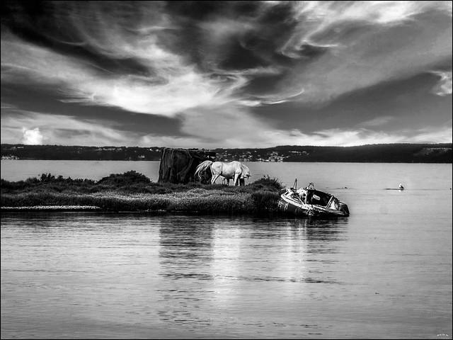 Les chevaux de l'îlot / Horses on the small island
