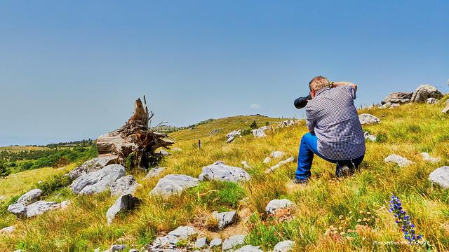 Stari, iščupani panj i fotograf s topom na primorskome kršu