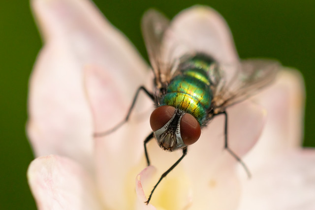 Flower & the Fly
