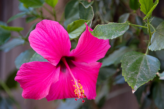 Backyard Flower...in Moreno Valley California