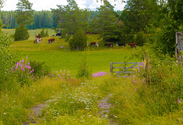 Uppsala pastoral