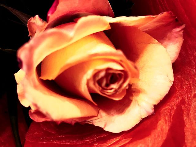 Thursday Floral