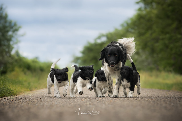 Mila & pupies