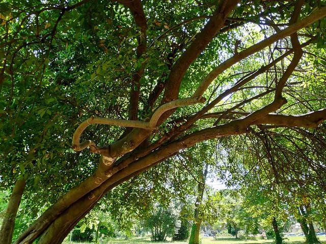 À l'ombre des grands arbres