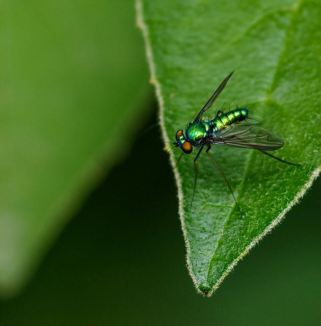 Green Sheen
