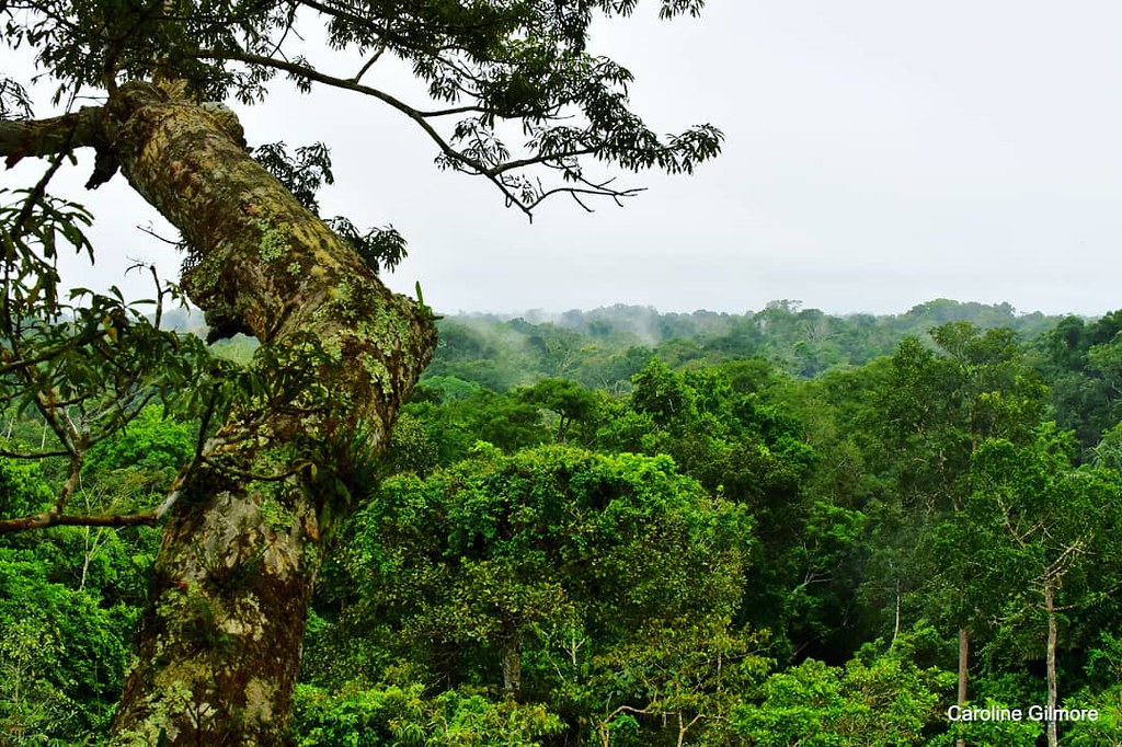 Happy belated World Rainforest Day! Amazon River Rainforest in Ecuador, May 2019