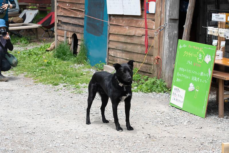 マナスル山荘の犬