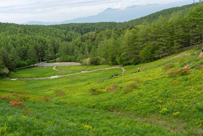 入笠山の花園