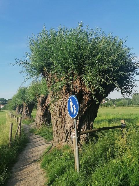 2021 - Limburg - Schin op Geul