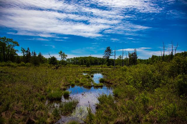 Wallace Sphagnum Bog Swamp