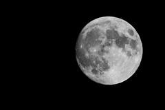 Lúa de San Xoán