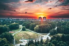 Birds   Kaunas aerial #183/365