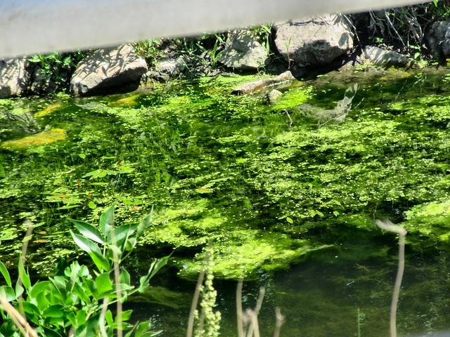 ROADSIDE WATER CANAL