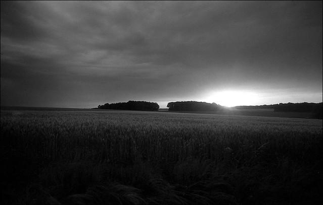 Tôt le matin, dans les champs.
