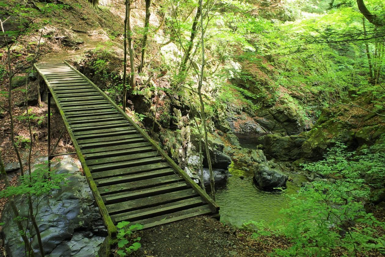 川苔山~百尋の滝 沢沿いの登山道